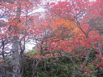 紅葉・赤色